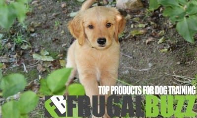 Top Products For Dog Training