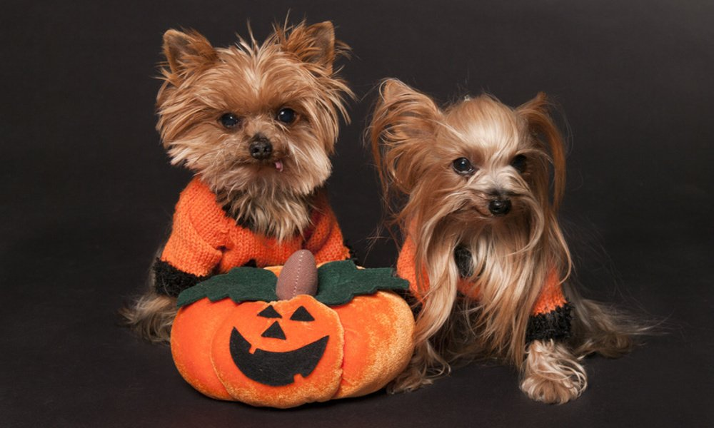 Top 10 Dog Halloween Costumes in 2015