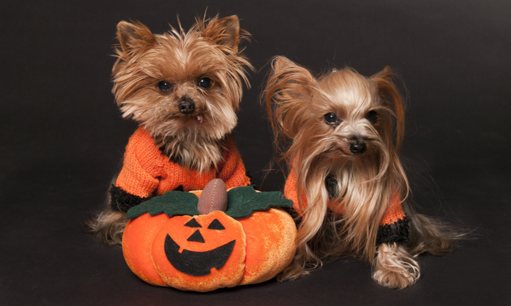 Top 10 Dog Halloween Costumes in 2015