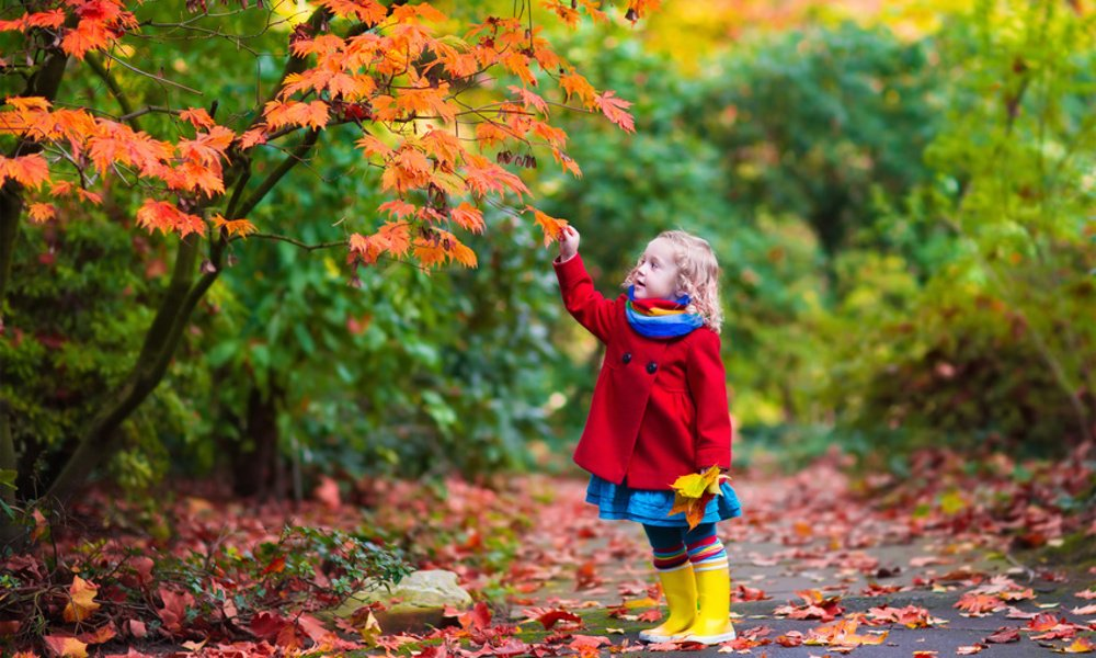 8 Reasons Fall is the Best Season of the Year
